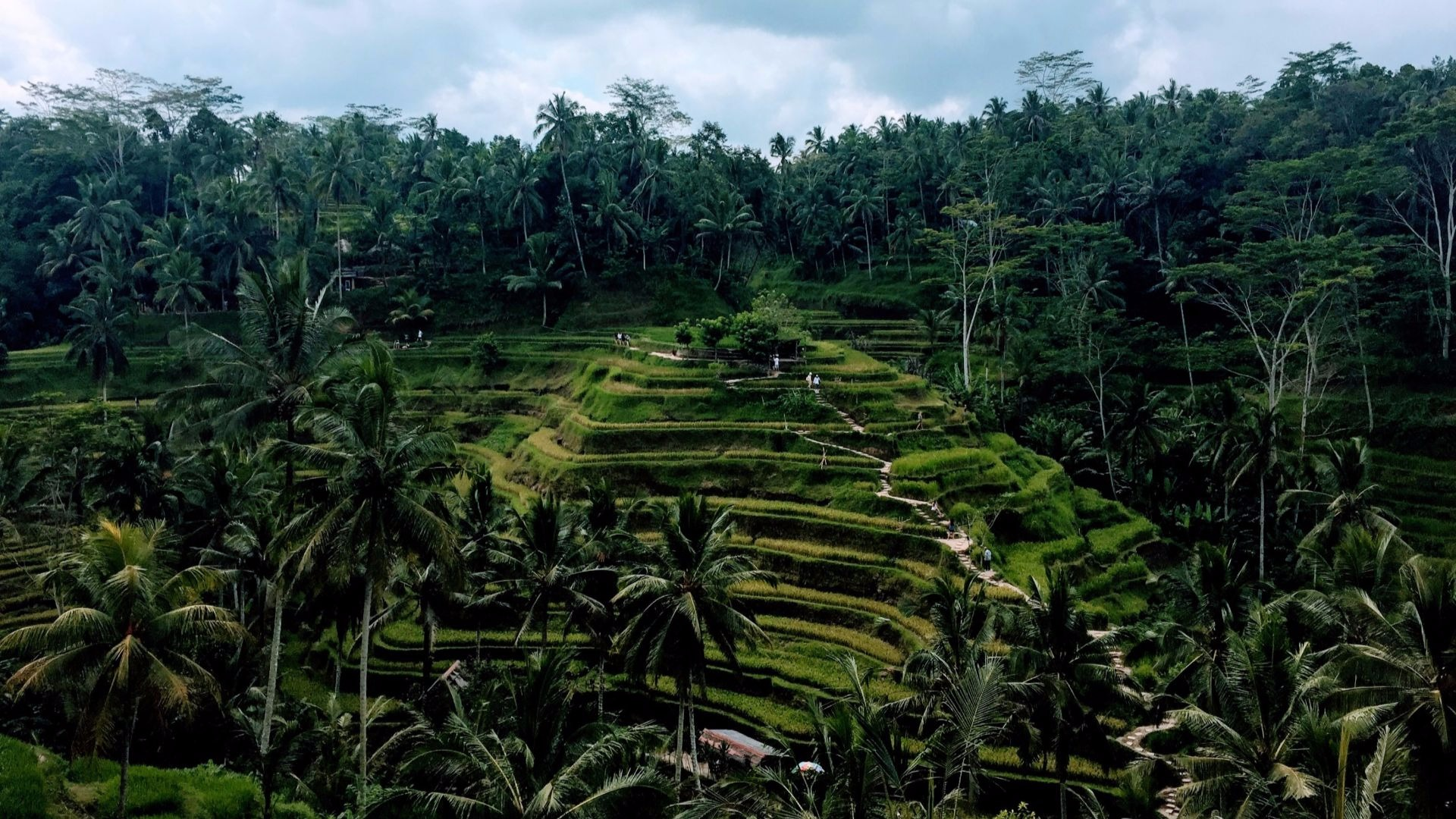 Two days in Ubud: What To Do and Eat