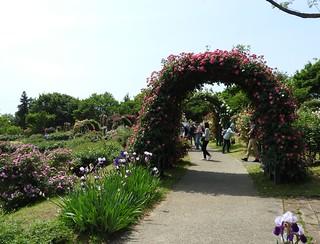 京成バラ園 20