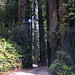 Driving in Jedediah Redwoods State Park