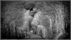 Sur la route de l'Hermitière.