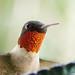 Best Birds 2010-2017