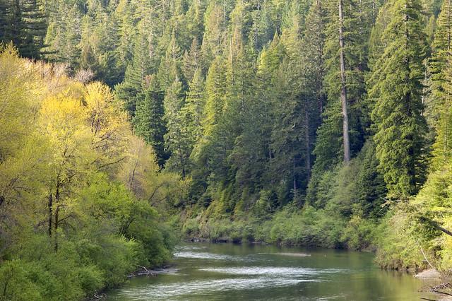 Eel Wild and Scenic River, California
