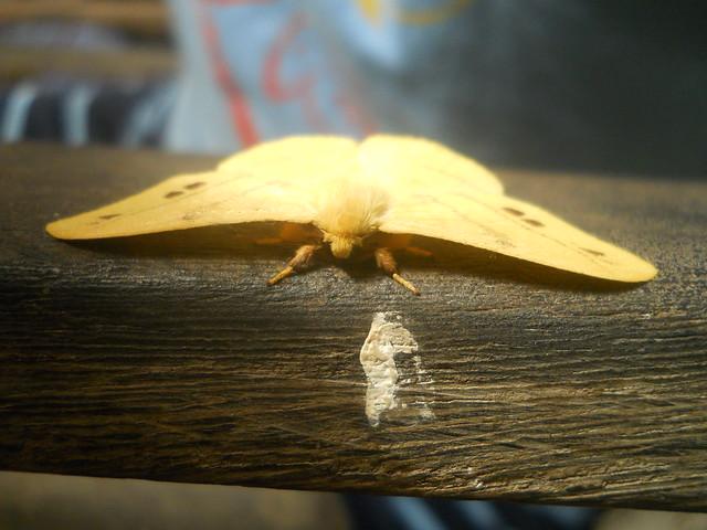 The Moth, Nikon COOLPIX L22