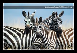 Threesome of Stripes
