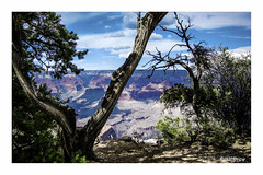 On the Edge of the Grand Canyon