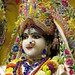 Darshan from IMG_5482