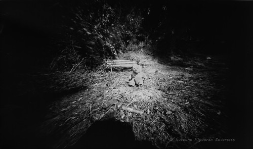 Pinhole Flowers: an experiment, first shots