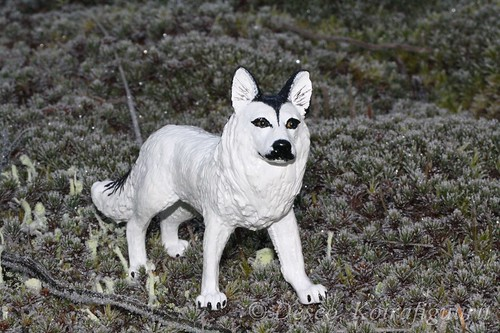 Mixed wolf dog