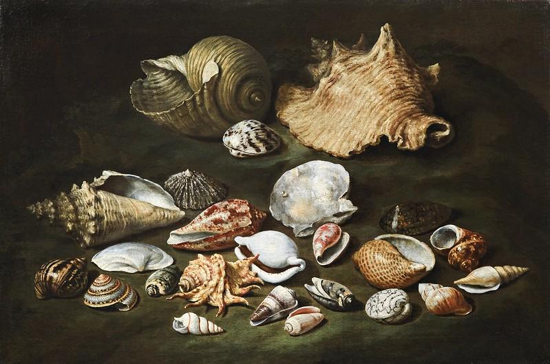 Paolo Porpora - Still life with shells