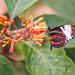 Butterfly #49