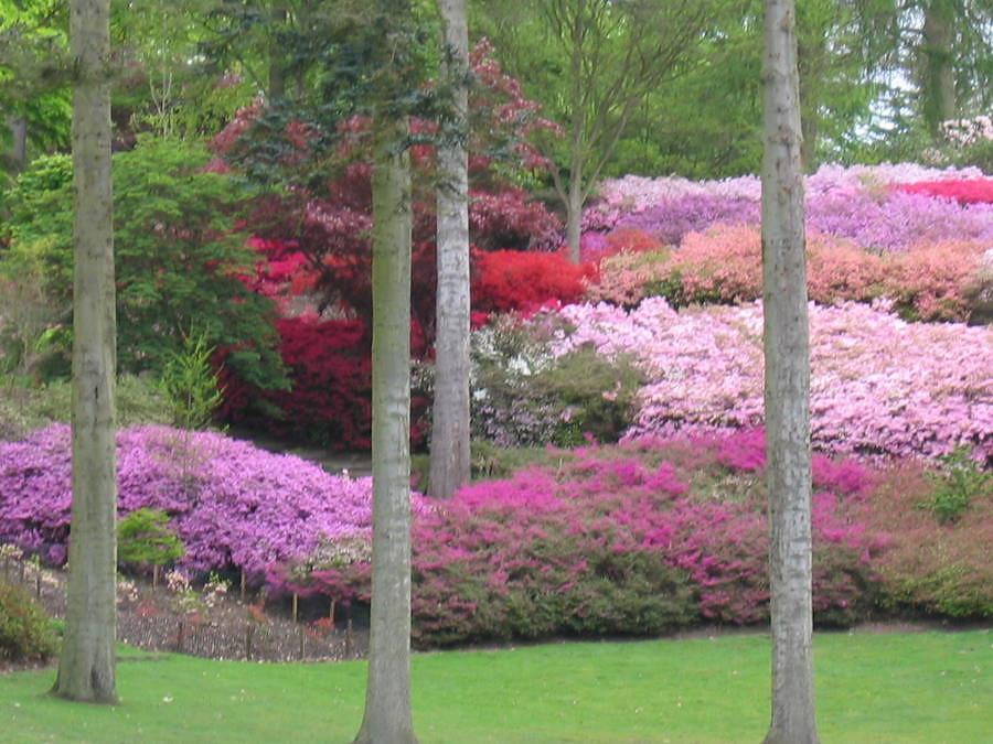 valley garden