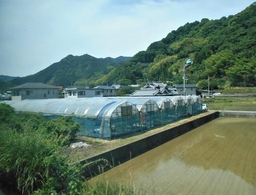 jp-Matsuyama-uwajima (4)
