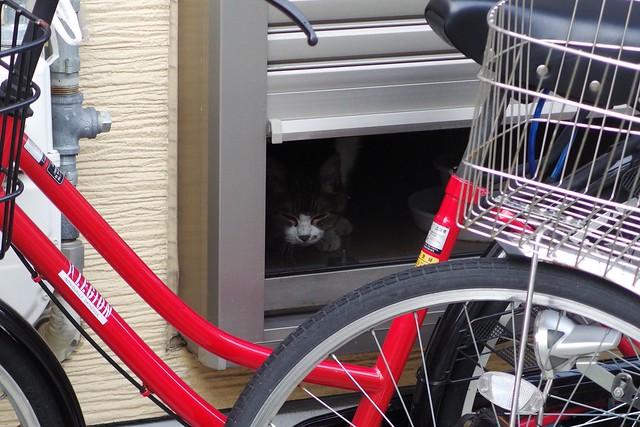 Today's Cat@2017-08-26