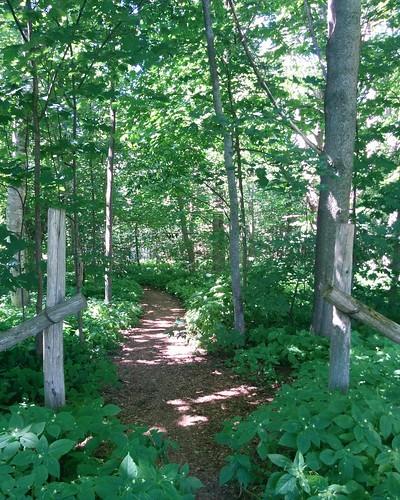 Path beyond #pei #princeedwardisland #charlottetown #fanningbank #garden #victoriapark