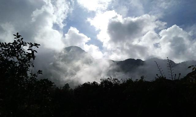 溪頭的山嵐 (9)