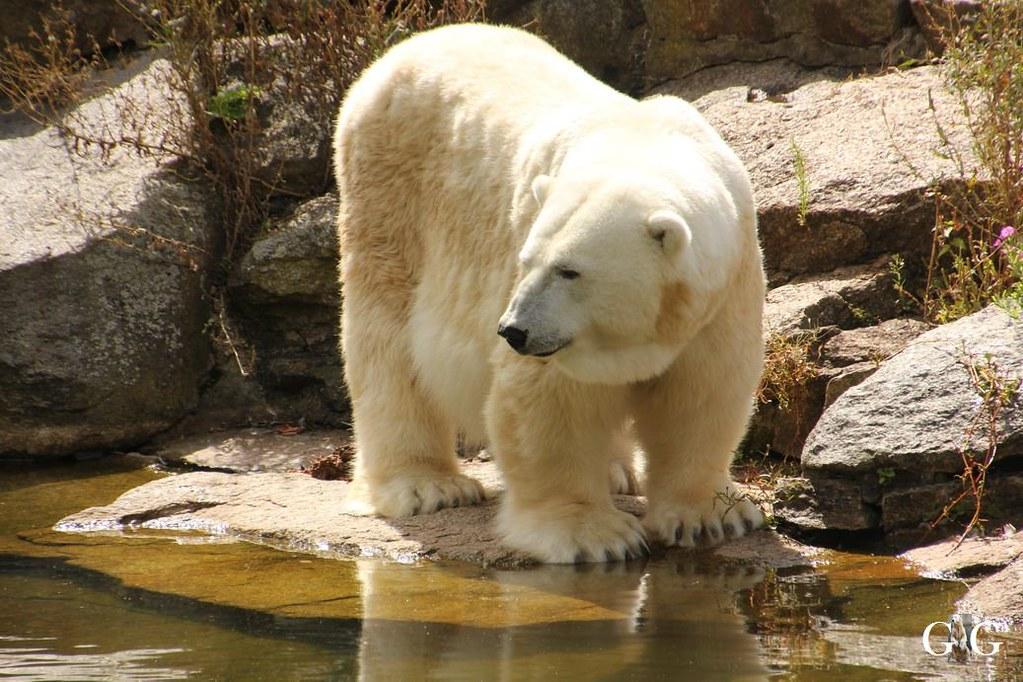 Besuch Zoo Berlin 13.08.17114