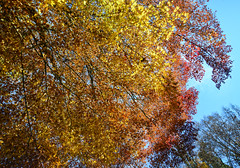 Autumn trees under blue sky in forest