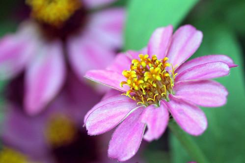 garden flowers IMG_7037