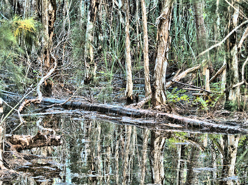 Melaleuca Swamp  Bright E-M10 20170808