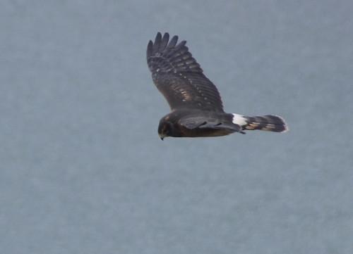 Bird in Lethbridge