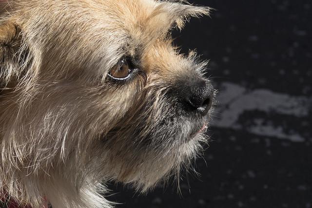 Gobi, Edinburgh Dog and, Canon POWERSHOT G7 X MARK II
