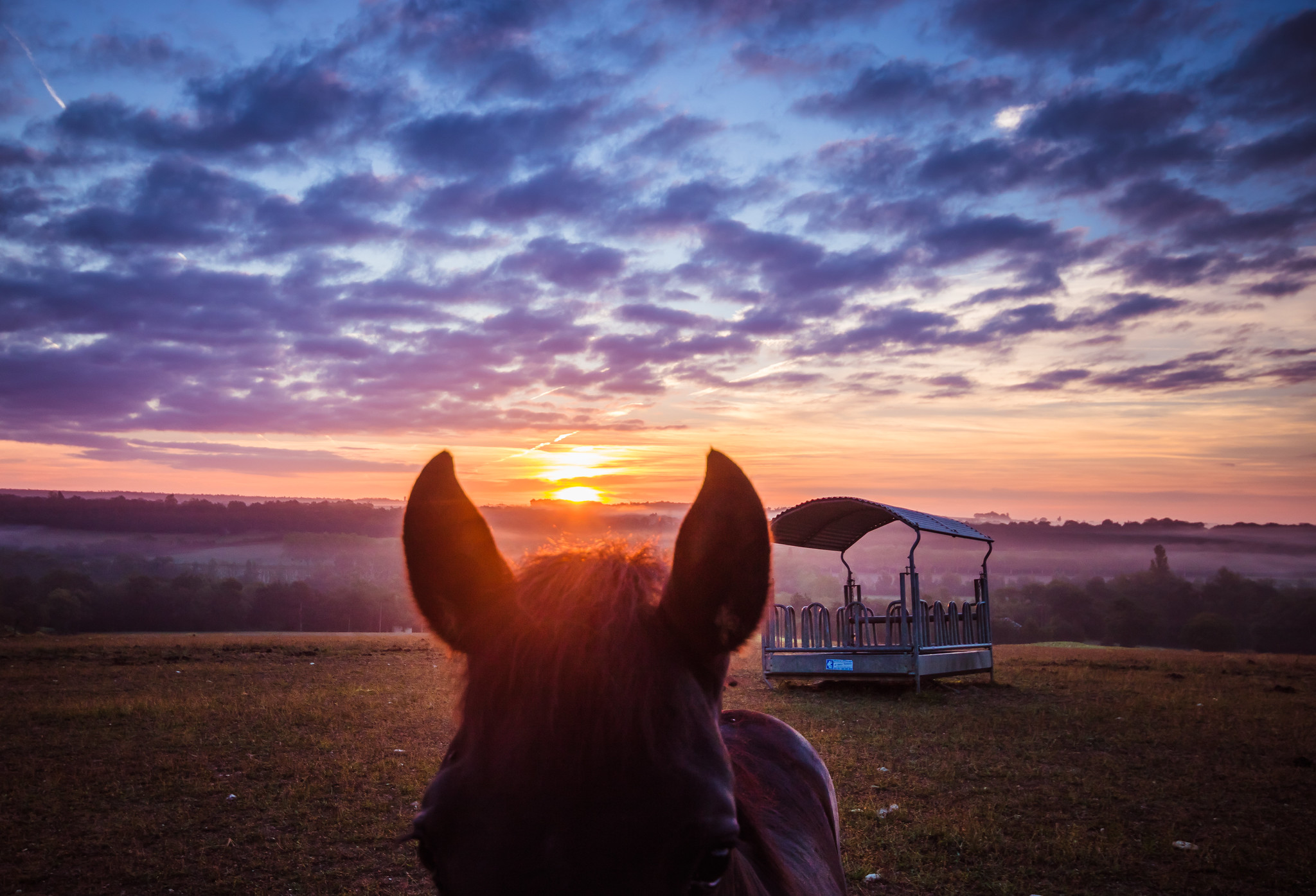 🐴 at sunrise