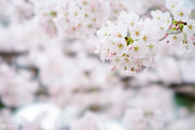 十年,京都四季 | 卷四 | 那兒春色滿城 | 03