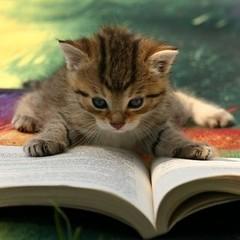 #Lectura Animación a la lectura 2.0 [[Hoy empieza la inscripción]] goo.gl/yVXun2