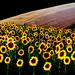 P4180807_edited-1 landscape by gpaolini50