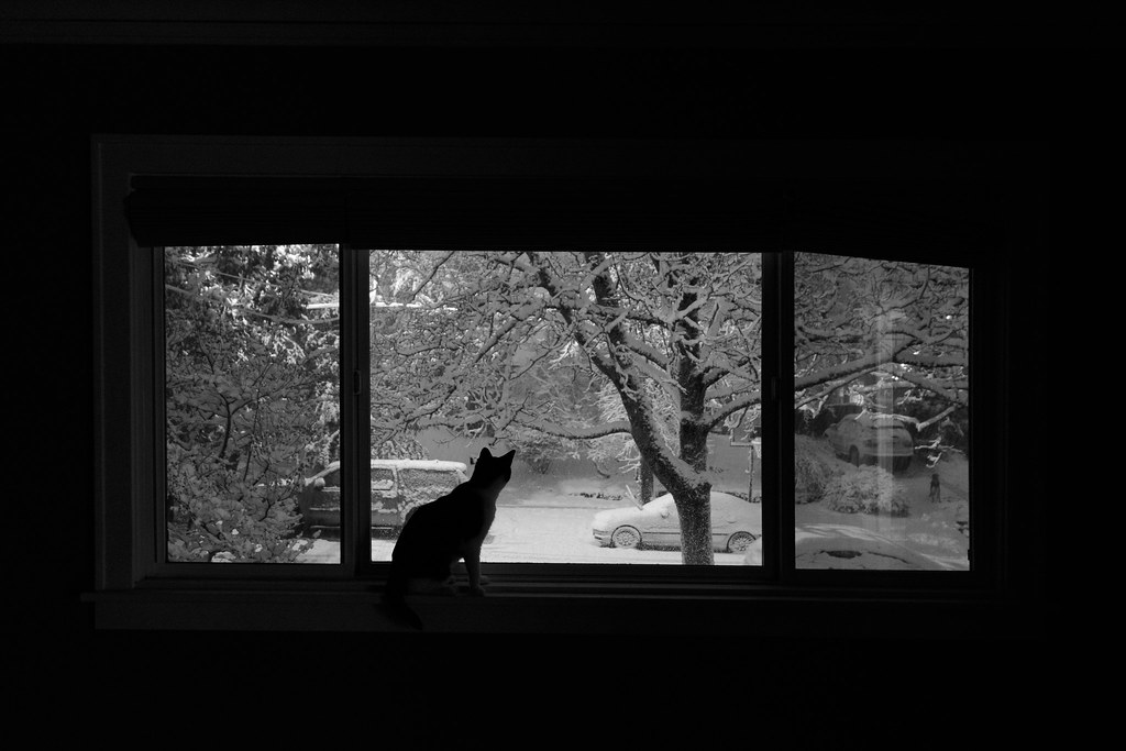 Our cat Boo watches a dog across the street in a heavy snow from our picture window