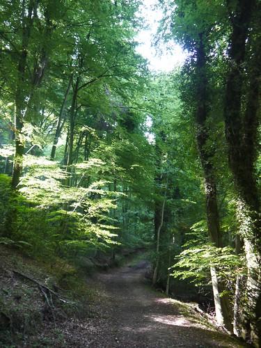 Saltridge Woods