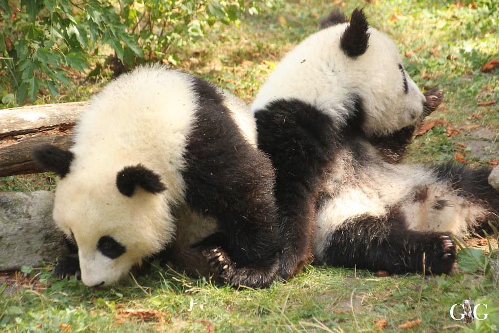 Ausflug Zoo Wien 26.08.2017161