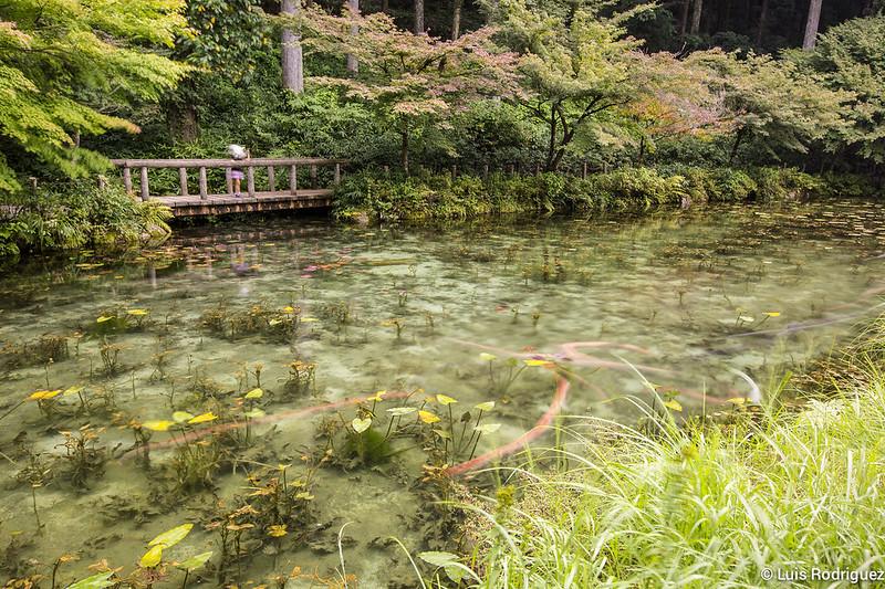 Estanque-Monet-Gifu-12