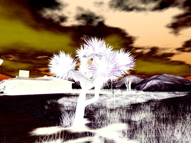 Mirage Motel 66-   Joshua Tree Moment