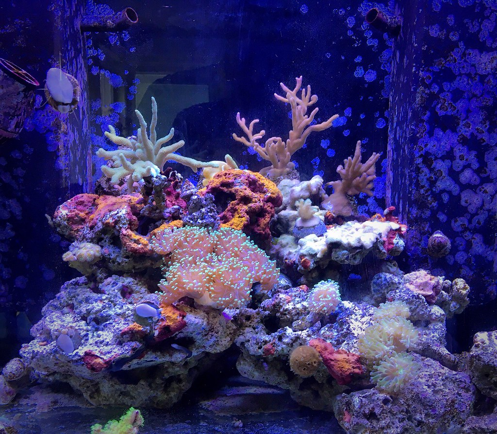 My little reeftank