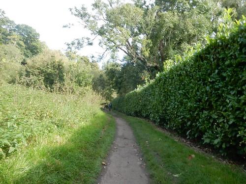 straight hedge
