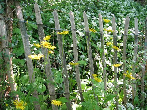 flowers in the fence