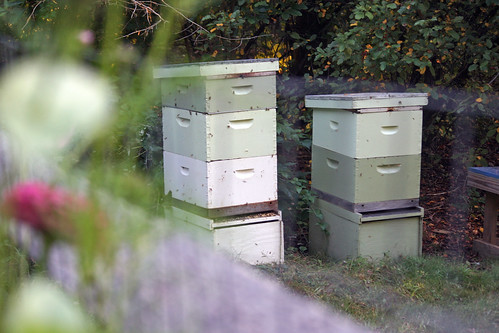 bee hives IMG_7125