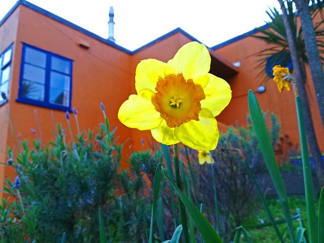 Spring-Flower-Island-Bayb.jpg