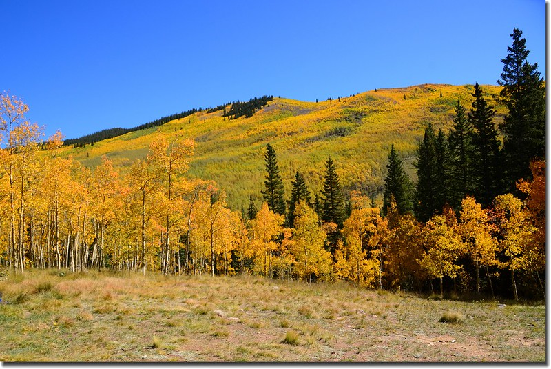 Fall colors, Kenosha Pass  (5)