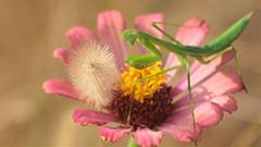 Flower arrangement for prey