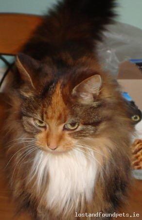 [Updated] Mon, Aug 7th, 2017 Lost Female Cat - Cashlan East, Lisdoonan, Carrickmacross, A81 X314, Monaghan
