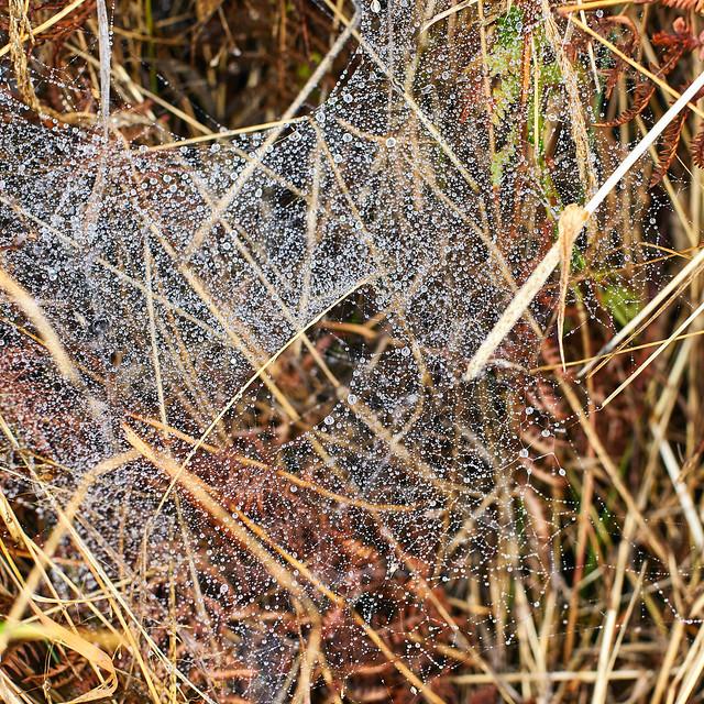 Eye - Spider Web in Rain