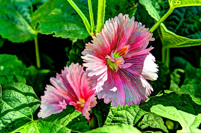 August Flowers - 1