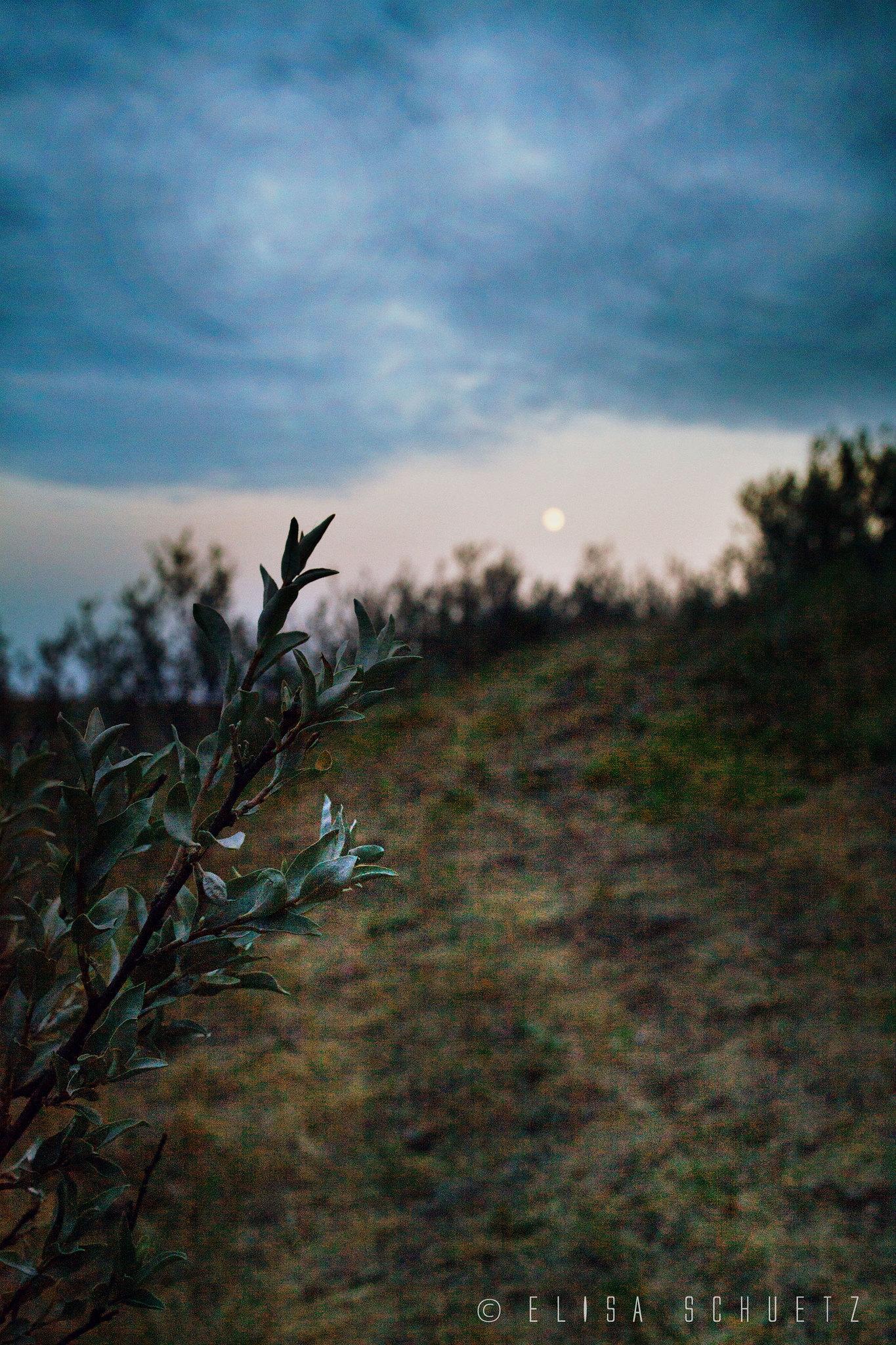 1_Grasslands_by_ems (4)