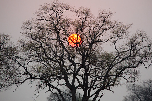 The sun was caught in a tree