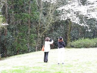 泉自然公園 41 桜吹雪