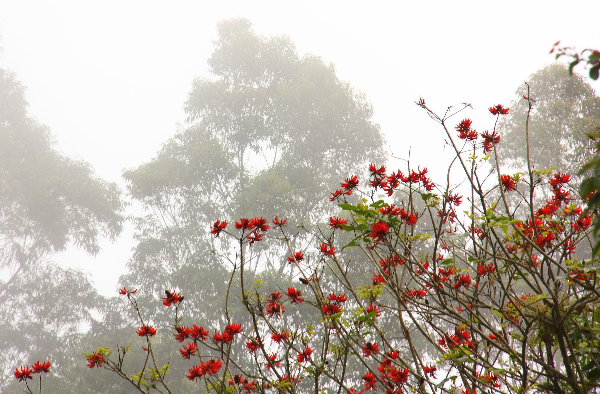 Spring flowers of Kodaikanal are very pretty