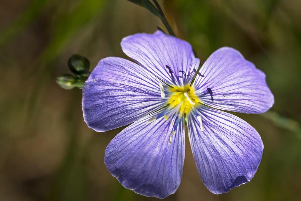 Wild-Flower-3-7D1-081817