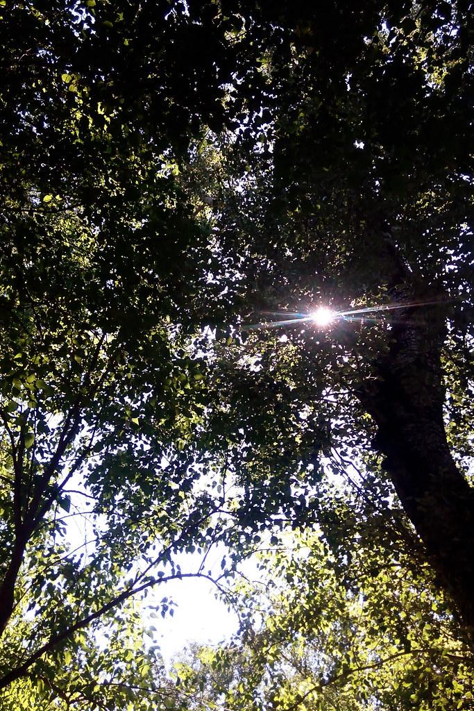 6.6.15 trees